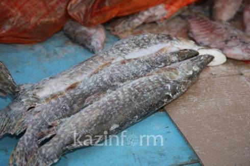Браконьер поймал 12 тонн рыбы в озере Балхаш