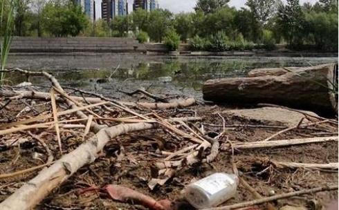 Сухостой с берега малого озера Центрального парка Караганды вывезут