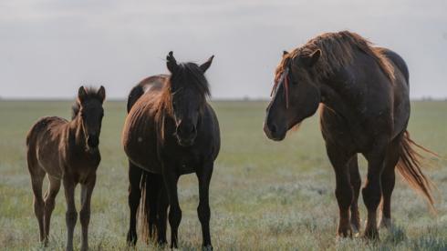 Поезд сбил насмерть лошадей в Карагандинской области