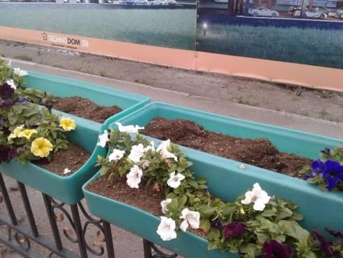 С городских клумб и вазонов Караганды с начала лета украли цветов на 900 тысяч тенге
