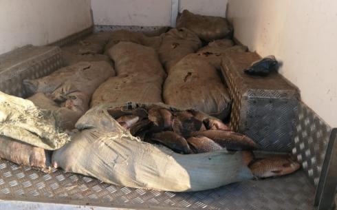 Жители Карагандинской области незаконно ловят рыбу