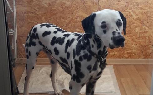 Собака может погибнуть – жительница карагандинского дома на карантине по улице Ермекова