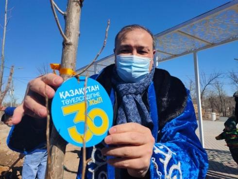 В Балхаше высадили 30 саженцев серебристого тополя