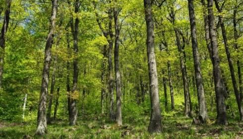 В Карагандинской области планируют создать зелёные зоны вокруг городов
