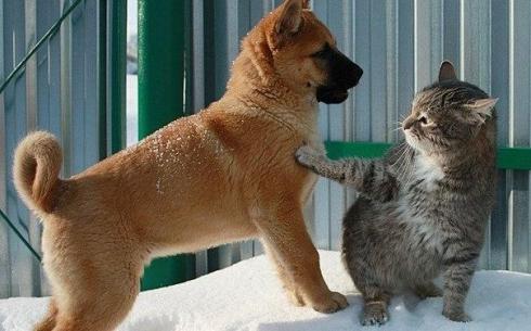 В Караганде построят площадку для выгула кошек и собак