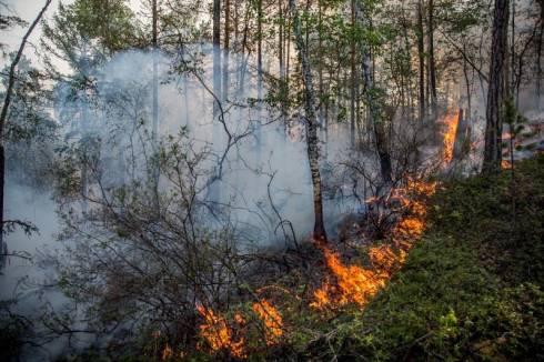 70 га леса горит в Нацпарке в Карагандинской области