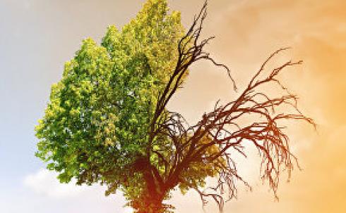 Карагандинцев приглашают принять участие в праздновании Всемирного дня окружающей среды