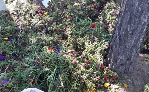 Вершки-корешки: в центре Караганды на клумбах перед акиматом выкорчевали цветы
