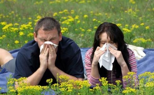 Как пережить самое опасное время для аллергиков?