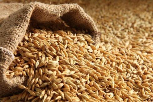 Цены на зерно назвали в Минсельхозе РК