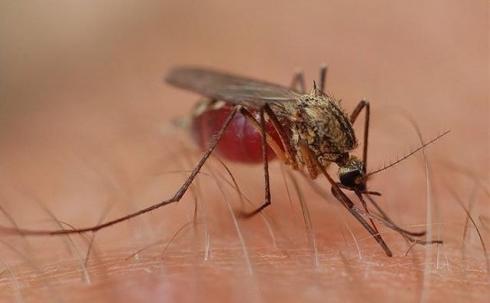Караганду одолевают скопища комаров