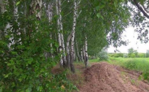 Вырубка деревьев в березовой роще Караганды пока откладывается
