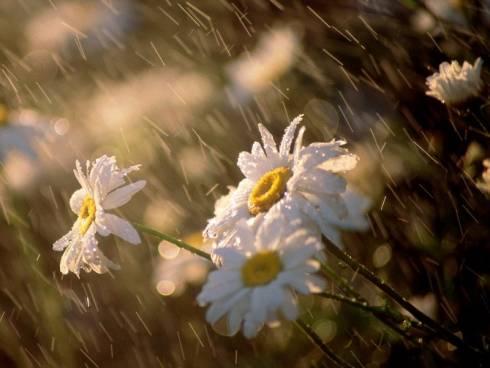 О погоде в Казахстане 15-16 июля рассказали синоптики
