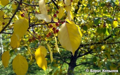 Шаг за шагом осень приходит в Караганду