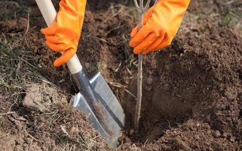Караганда примет участие во Всеказахстанском дне посадки леса