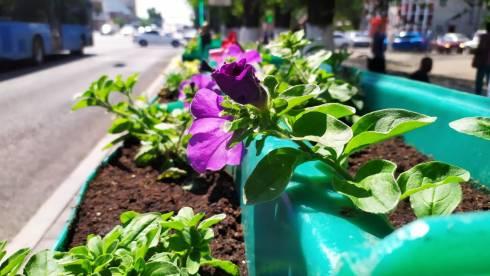 На центральных улицах Караганды наконец-то появились вазоны с цветами